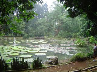 Kebun Raya Bogor © Talaborn