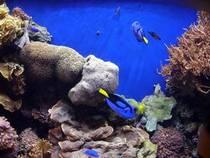 Fische im Monterey Bay Aquarium © C G-K