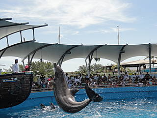 Delfinshow im Miami Seaquarium © osseous