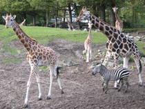 Parkübersicht: Zoo Emmen
