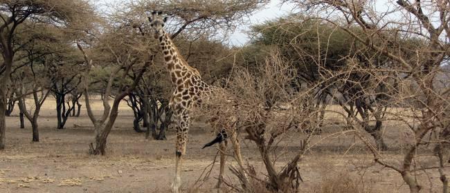 Ausflugsziele und Attraktionen in Afrika