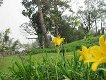 Cinchona Botanical Gardens © Ministry of Agriculture