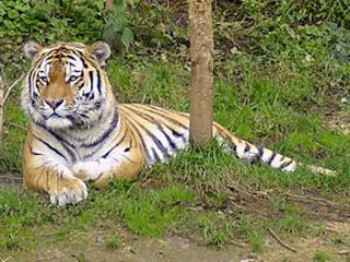 Zoo Landau © Zoo Landau
