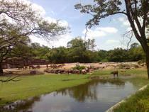 Nehru Zoological Park © PP Yoonus