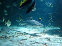 Haifischbecken im Tropikariet Helsingborg. © hepp